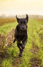 A Dog's Tale by skeanight37