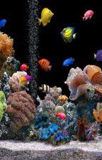 Im Aquarium 19 by fischilover