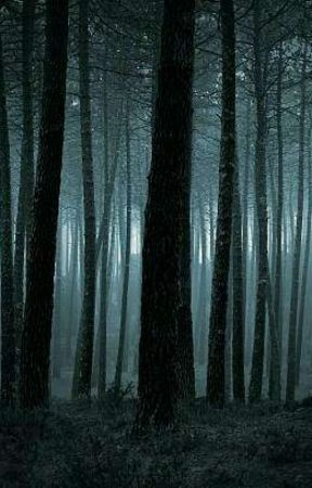 Scary Forest Story - Wattpad