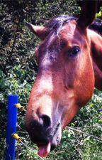 ASDS-Pferd vs Tod by pferdeliebe_forever