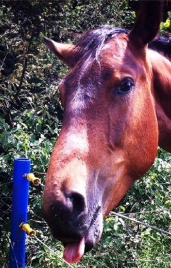 ASDS-Pferd vs Tod