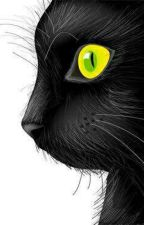 Black Cat RWBY x Male Neko Reader (SLOW UPDATE) by ImTheUnderTaker_28