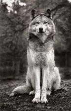 La louve sorcière ( en réécriture) by cceelliiaaaa
