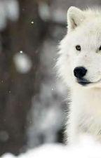 Porzucona wilczyca  by emlee1304