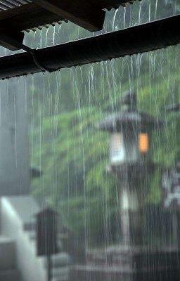 Đọc truyện ngồi bên hiên nhà nghe tiếng mưa rơi | taegi