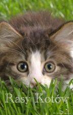 Rasy Kotów by Mangozjeb-chan