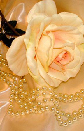 Une Rose,Un amour by Liosange