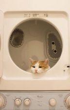 | Chuyển ver - Hoàn - KookV | - Mèo trắng cùng sổ ghi chép by PeanElec