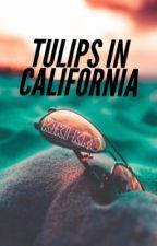 Tulips in California by KikiKro