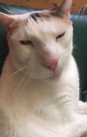 My cat's panini by sugakeiji
