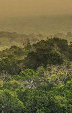 Amazzonia Umana. by NicholasMassa