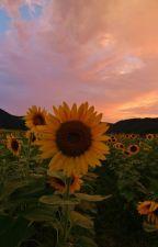 sunflower by LidyaTriwulandari