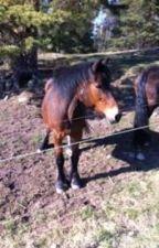horselife (svenska) by justcuddling