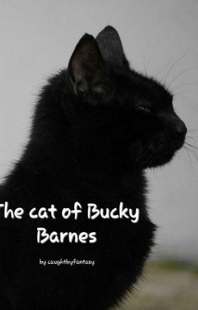 The cat of Bucky Barnes (Bucky x reader) - Bucky to the
