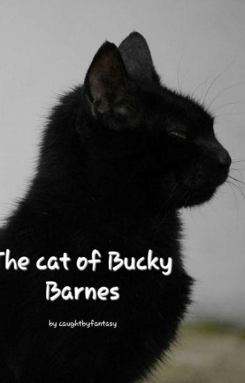 The cat of Bucky Barnes (Bucky x reader) - caughtbyfantasy - Wattpad