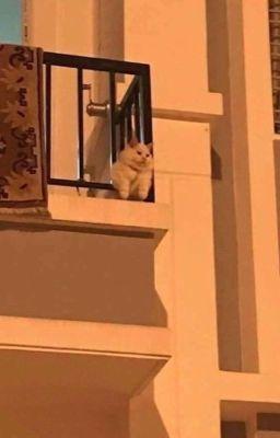 seokmin ; nhà có nuôi một chú mèo