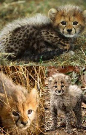 Kimmy and Kamatu the Leetah Cubs by karynahrodriguez