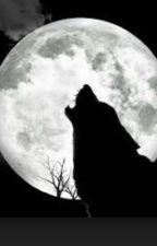 Luna Overnight by RandomChick28