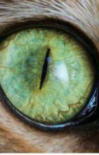 Eyeless Jack x neko!reader by MadMax662