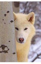 wolf girl by redboom