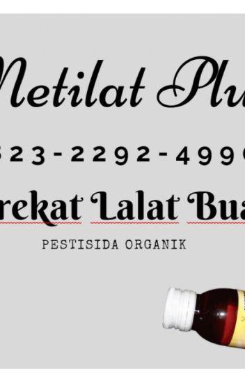 Manado online