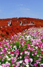 Ý nghĩa các loài hoa.Ngôn ngữ không lời by GyGy6412