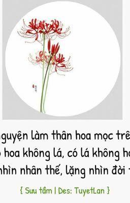 Các câu nói về Bỉ Ngạn hoa.  ( Đã hoàn )