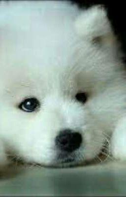 Đọc truyện Hồi Sinh Thành Chó Tại Dị Giới