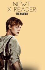 Newt x Reader - The Scorch  by Erojon