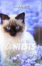 • Contests • Warrior Cats • by HorseANDCatLover222