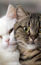 gatos guerreros en la vida real. by azotelover