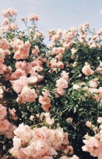 Rose with Thorns // Phan DDLB