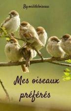 Mes oiseaux préférés  by oeildeloiseau