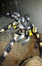 Tarantulas 2 by charleswrites