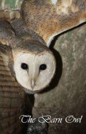 The Barn Owl by Rosathorne