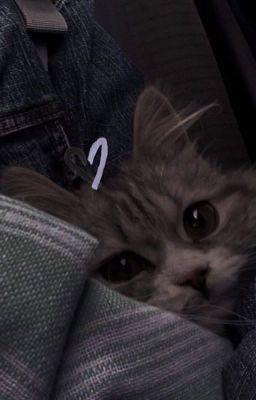 Đọc truyện m.yunki ;; ma cattie