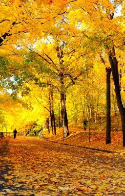Đọc truyện Chiều mùa thu rụng lá.
