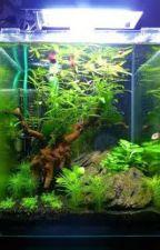 L'aquariophilie by lele20002