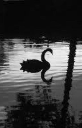 Swans Have Come Back >> Black Swans Comeback Teaser Wattpad