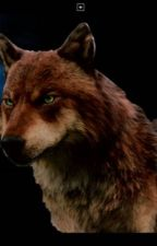 Lobos ?{Hiccstrid moderno] by hiccstrid_dragons