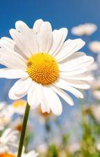 My Flower by rosymillster