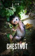 Chestnut by unknownIx_