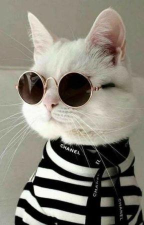 el gato dice miau by goldenbabyy_