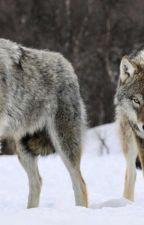 The  Werewolfs'  Mates by Scomicheinator