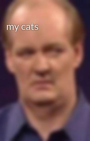 my cats by thebluekittycat