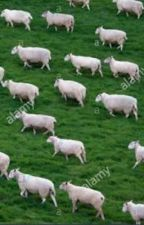 Sheep  by that_sheep_guy