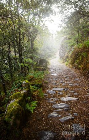 The Song of Rain (G/T Amyplier) by PlatonicSeptiplier