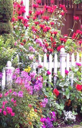 Fragrant Plants Online In Delhi