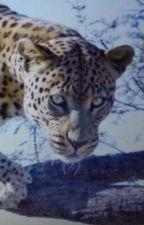 Leopard- Die Entführung by mabelzx