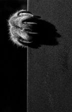 Dawnclan     A warrior cats mafia game by Dawnnose